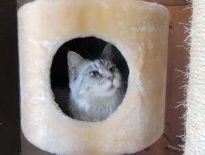 Лилу. Кошка Ирины Шухаевой.